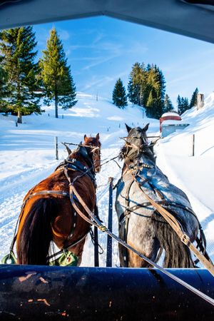 Horse-drawn carriage rides on Mt. Rigi