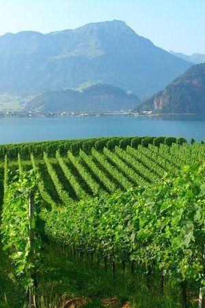 Vineyard Tour and Tasting